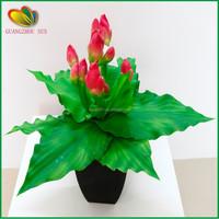 wholesale high quality cheap mini yucca plant bonsai tree for sale