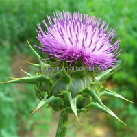 Shui fei ji zi excellent herbs for sale for Milk thistle seed with high quality organic milk thistle seed