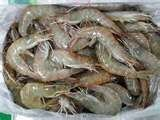 Vannamei Shrimp from Ecuador Whole