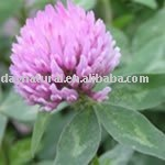 Red Clover Extract with HALAL, KOSHER, HACCP Certificate