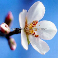 high quality various size canvas flower oil sample picture of canvas painting