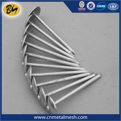 Q195 umbrella head roofing nails with factory new price