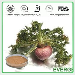 Factory Best Quality maca root extract 4:1