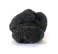 New products fresh frozen tuber indicum truffle