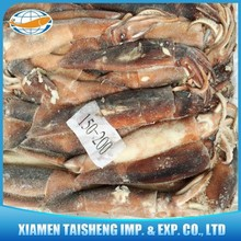Illex Squid Tube Seafood Products
