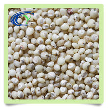 import quality brown rice for sale