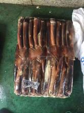 150-200g Frozen Argentinus Squid For Bait Whole Round