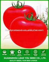 T23 Baodian determinada f1 híbrido mejores precios Semillas de tomates