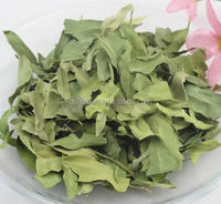 100% Natural 10:1 Dogbane Leaf Extract