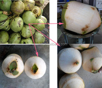 2015 hot sale green coconut trimming machine,green coconut processing machinery