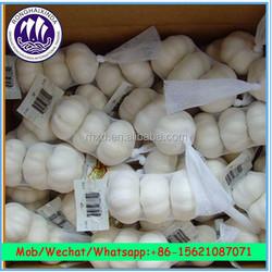 Wholesale China Natural White Garlic Price / 10kgs carton box package