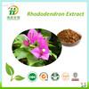 100% Natural Rhododendron Dauricum Extract,Folium Rhododendri Daurici Extract4:1
