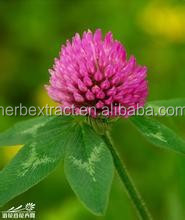 Supply Chinese Herbal Extract of High-quality Red Clover Extract