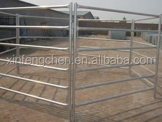 cattle panel2