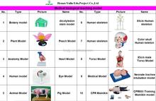 Dicot Flower Model/Peach Flower model