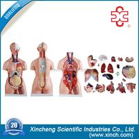 medical science lab kit human organs model for kids teaching