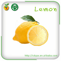 Fresh Citrus Fruits /Yellow Lemon&Lime/ Best Selling Products/ Wholesale