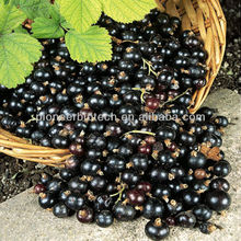 100% Natural Pure High Quality Blackcurrant Extract with 5% 10% 15% 20% 25% Anthocyanins UV/ HPLC