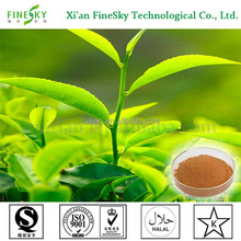 Natural green tea extract tea polyphenol UV