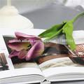 boda del tulipán decorativo para la venta