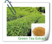 Organic Green Tea Extract,100% Natural Green Tea Powder,Green Tea Polyphenol