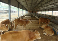 High quality prefabricated light steel structure sheds for poultry farm cattle shed