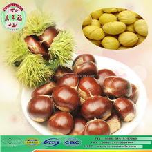 the world best chestnuts organic fresh wholesale chestnuts