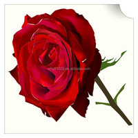 High quality Rose Extract with best price