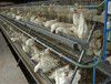 FRD Professional High Quality Full Automatic Chicken Layer Battery Cage