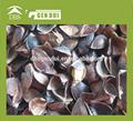 Dulce de trigo sarraceno precio wth de alta calidad, trigo sarraceno verde