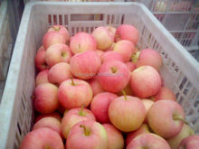 2015 sweet red apple factory export for india market