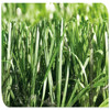 New type double-stem artificial grass football grass with green yarns