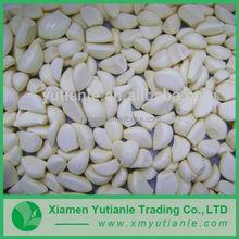 China supplier 2015 garlic your best choice