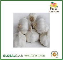 china fresh white garlic wholesale price