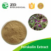 Hot Sale Free Sample Coleus Forskohlii Extracts Forskolin Loss Weight