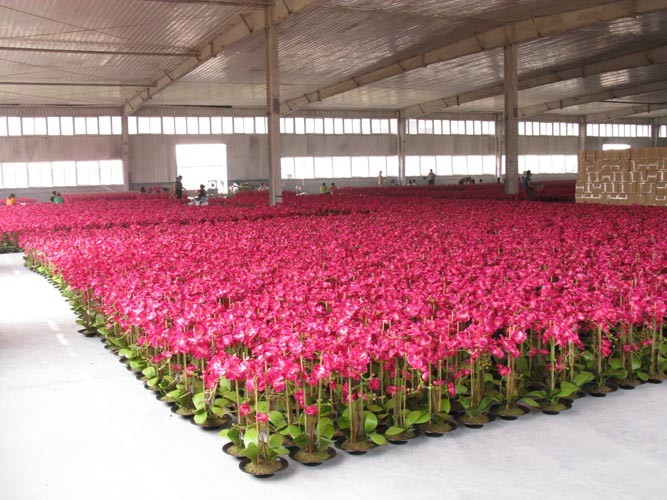Fashionable cheap real touch artificial lotus flower for wedding jpg mass production picture1g mightylinksfo