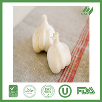 fresh garlic for middle east