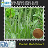 20:1 High Quality Plantain Herb Extract Powder