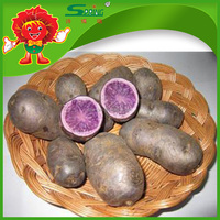 Natural Chinese Purple Sweet Potato in mesh bag