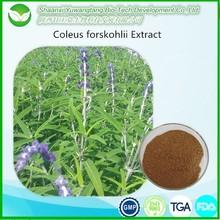 Free sample - coleus forskohlii extracts forskolin