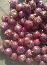 China types of fresh red onions