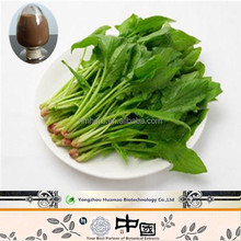 New products on china market bulk organic spinach