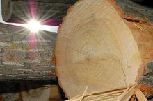 veneer poplar logs for sale
