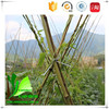 Root Whangee Cane Rattan Bamboo Cane