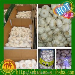 Wholesale Garlic Fresh Natural Garlic Price