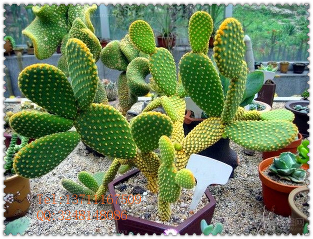 Mini artificielle figue de barbarie en pot artificielle for Mini cactus artificiel