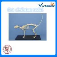 pretty cat skeleton model for teaching gift