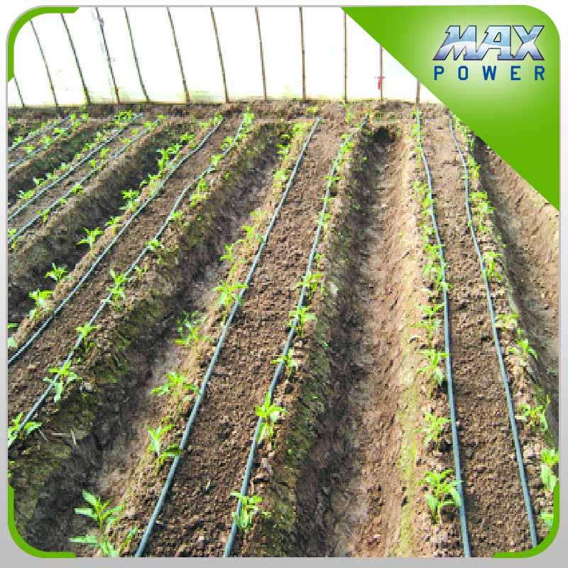 Tomate agricole d 39 irrigation goutte goutte bande fl che for Irrigazione a goccia per pomodori