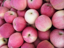 20kg Gala apple with bag Trade Assurance