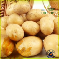 certified fresh holland sweet potato 150-200g price for export